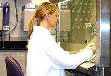 Cell Culture Service
